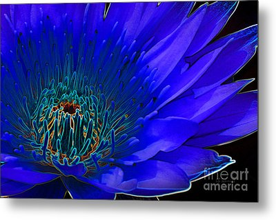 Butterfly Garden 11 - Water Lily Metal Print