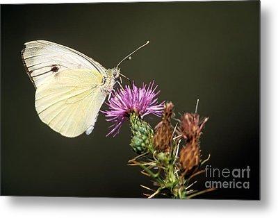 Butterfly Metal Print by George Atsametakis