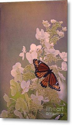 Butterfly Glow Metal Print by Elizabeth Winter