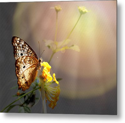 Butterfly Glow Metal Print by Judy Vincent