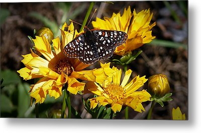 Metal Print featuring the photograph Butterfly Heaven by Julia Hassett