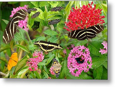 Butterfly High Metal Print