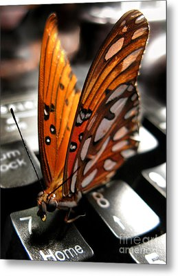 Metal Print featuring the photograph Butterfly Home At 7 by Jennie Breeze