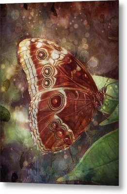 Butterfly In My Garden Metal Print by Barbara Orenya