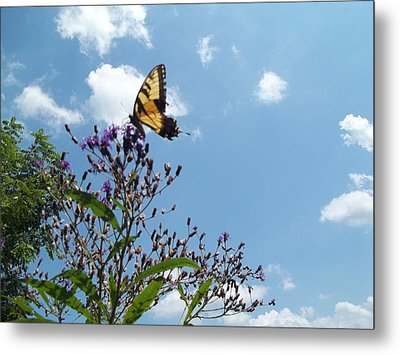 Metal Print featuring the photograph Butterfly In The Wild by Eric Switzer