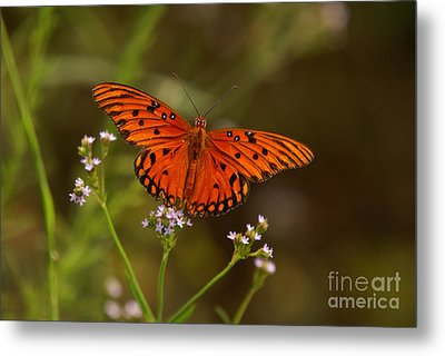 Butterfly Metal Print by J Cheyenne Howell