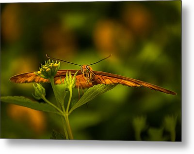 Butterfly Metal Print by Jay Stockhaus