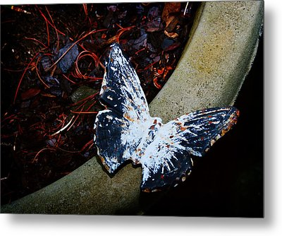 Butterfly Metal Print by Kara  Stewart