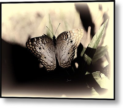 Metal Print featuring the photograph Butterfly Kisses by Oscar Alvarez Jr
