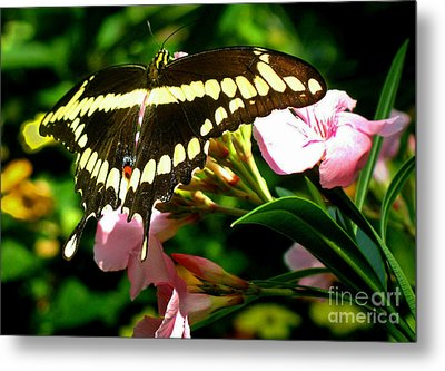 Butterfly Metal Print by Kristine Merc
