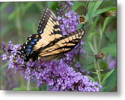 Metal Print featuring the photograph Butterfly Landing by Greg Graham