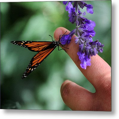 Metal Print featuring the photograph Butterfly by Leticia Latocki