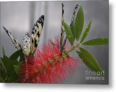 Metal Print featuring the photograph Butterfly Love by Carla Carson