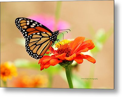 Butterfly Lunch Metal Print