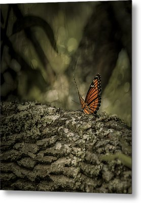 Butterfly Metal Print by Mario Celzner