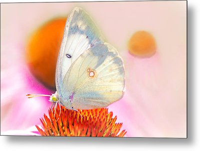 Butterfly Metal Print by Marion Johnson