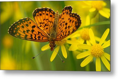 Metal Print featuring the photograph Butterfly by James Peterson