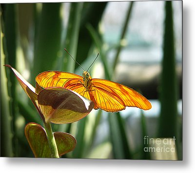 Metal Print featuring the photograph Butterfly by Michael Edwards