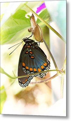 Butterfly Nursery Metal Print by Jon Woodhams