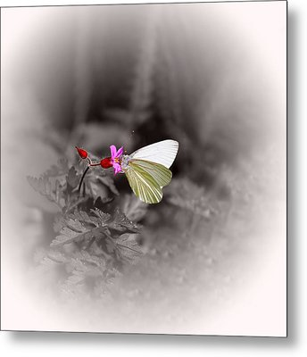Metal Print featuring the photograph Butterfly On A Pink Flower by Tracie Kaska