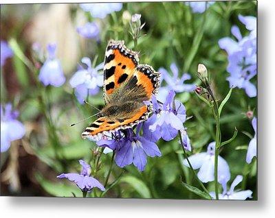 Butterfly On Blue Flower Metal Print by Gordon Auld