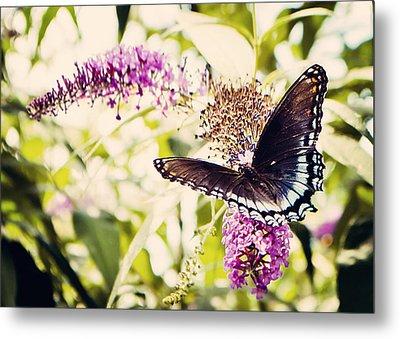 Butterfly On Butterfly Bush Metal Print