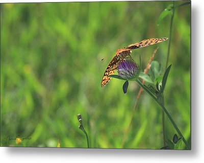 Butterfly On Clover Metal Print