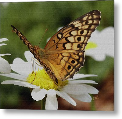 Metal Print featuring the photograph Butterfly On Daisy by James C Thomas