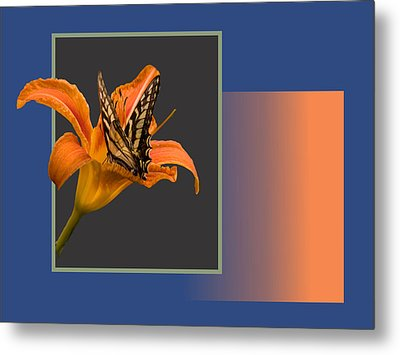 Butterfly On Day Lily Metal Print