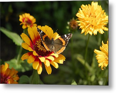 Butterfly On Flower Metal Print