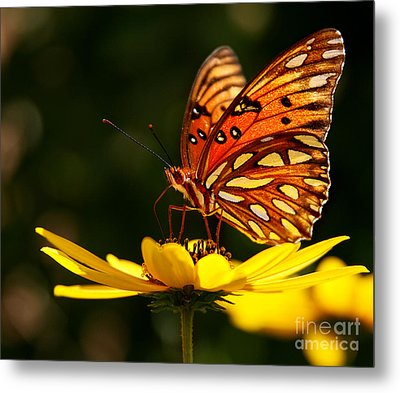 Butterfly On Flower Metal Print by Joan McCool