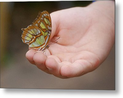 Metal Print featuring the photograph Butterfly On Hand by Leticia Latocki