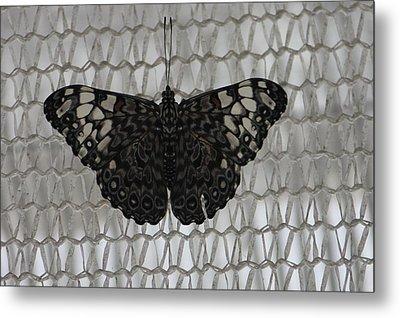 Butterfly On Net Metal Print by Bill Woodstock