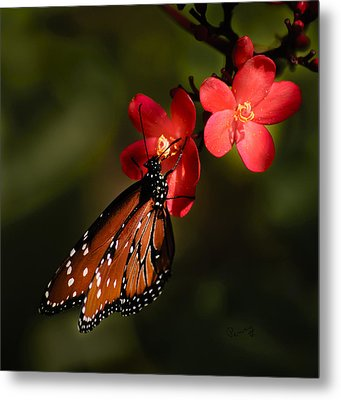 Butterfly On Red Blossom Metal Print