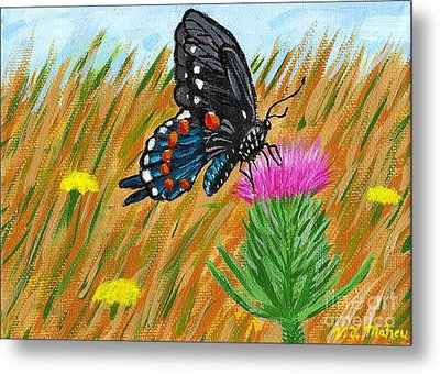 Butterfly On Thistle Metal Print by Vicki Maheu