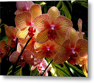 Metal Print featuring the photograph Butterfly Orchids by Rodney Lee Williams
