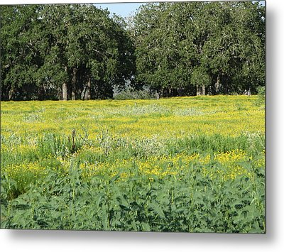Metal Print featuring the photograph Butterfly Paradise by John Glass