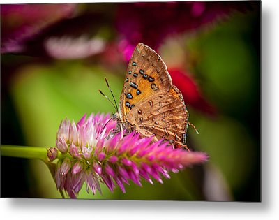 Butterfly Pink Sparkle  Metal Print by Isabel Laurent