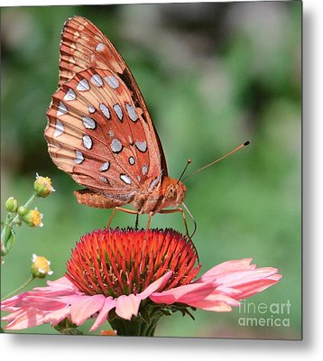 Butterfly Sipping A Coneflower Metal Print