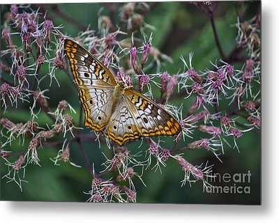 Metal Print featuring the photograph Butterfly Soft Landing by Thomas Woolworth