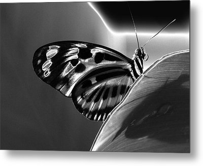 Butterfly Solarized Metal Print by Ron White