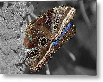 Butterfly Spot Color 1 Metal Print