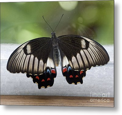 Butterfly Metal Print by Steven Ralser