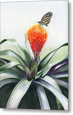 Butterfly Sunning In Costa Rica Metal Print