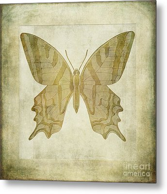 Butterfly Textures Metal Print by John Edwards