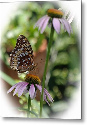Butterfly Time Metal Print