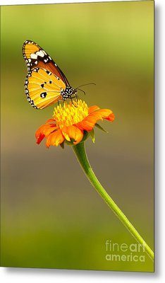 Butterfly Metal Print by Tosporn Preede