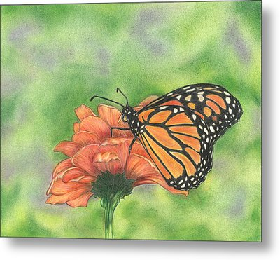 Butterfly Metal Print by Troy Levesque