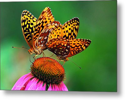 Metal Print featuring the photograph Butterfly Twins by Christina Rollo