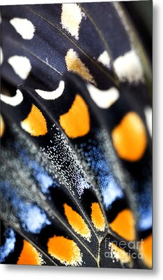 Butterfly Wings Metal Print by Iris Richardson